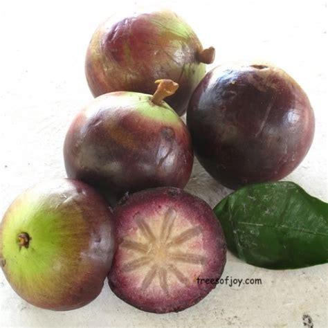 apple vietnam star apple place i love philippines pinterest