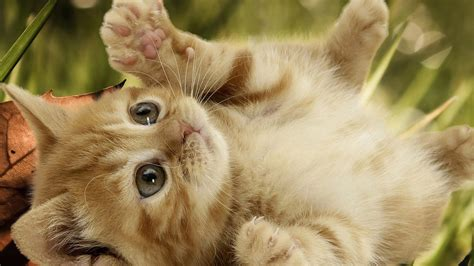 funny baby cats 4 free wallpaper funnypicture org