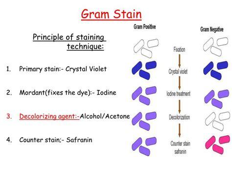ziehl neelsen principle ppt principle of staining technique powerpoint