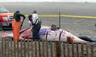 darkest hour jersey city dead whale that washed up in atlantic city vandalized with