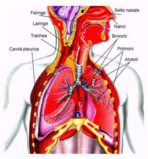 test apparato respiratorio l apparato respiratorio test scuola