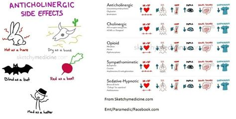Anticholinergic Also Search For Anticholinergic Side Effects Emt Studies