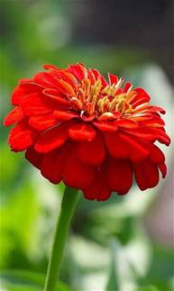 Hd Flower Images beautiful red flower beautiful flowers wallpapers download flower hd