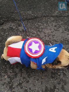 captain america pug 1000 images about pugs on pug a pug and pug puppies