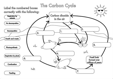Carbon Cycle Worksheet Answers by Gcse Carbon Cycle Worksheets And A3 Wall Posters By