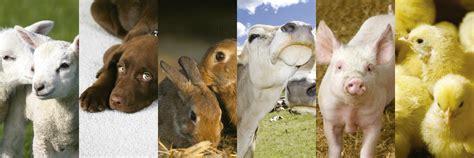 alimentazione animale alimentazione animale quimidroga