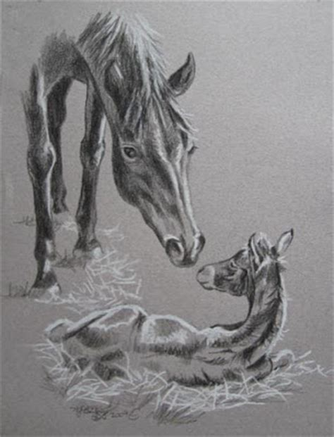 J Harold Bailey Sketches by Cliffy S S Mare And Foal Pencil Drawing