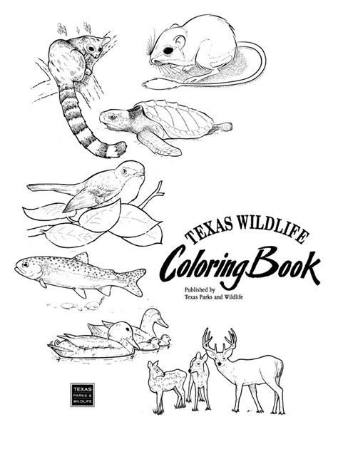 texas landforms coloring pages coloring pages