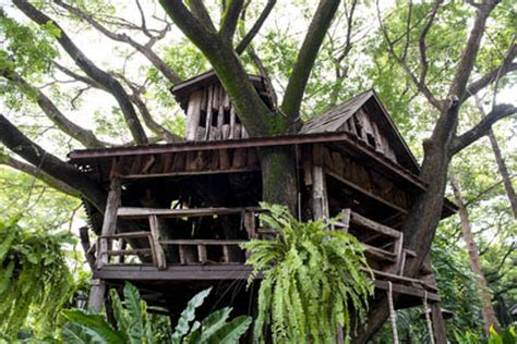 Upholstery Repairers Building A Tree House In Australia