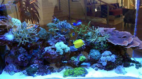 coral reef home decor 100 coral reef home decor cretaceous 27 in x 7 in x