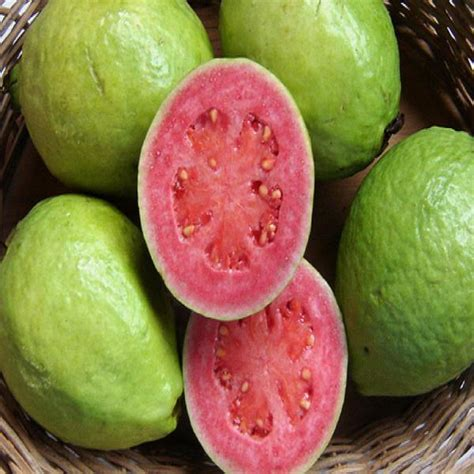 guava red flesh grafted fruit plants tree exotic space