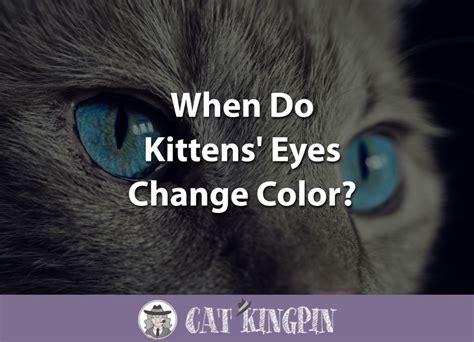 when do kittens change color cat kingpin
