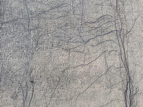 images vine white texture floor wall asphalt soil material root background