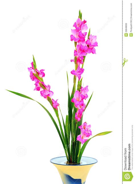 Pink Flower Vases by Pink Flowers In Vase Stock Photo Image 29848830