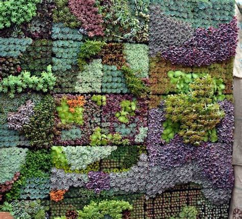 succulent garden wall sedum and succulent planters the garden glove