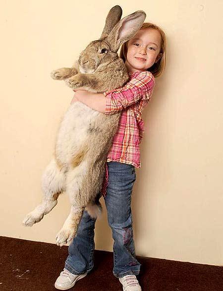 Bunny Record Rabbit World Record Set By Darius The Rabbit