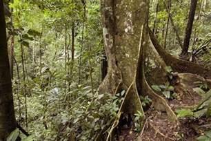 Plant Adaptation In Tropical Rainforest - tropical rainforest kidcyber