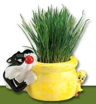 Chia Cat Grass Planter Chia Cat Grass Planter