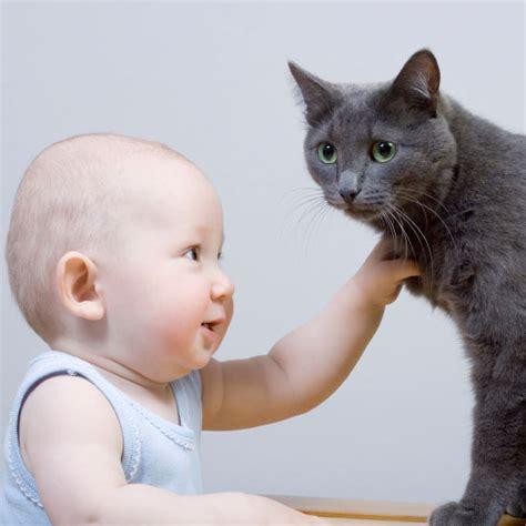 le chat et l arriv 233 e d un b 233 b 233 comportement du chat