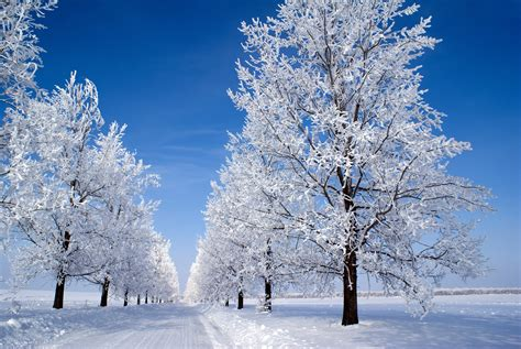 winter snow trees 1845288