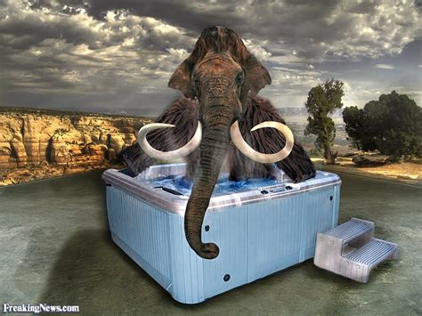 hot tub funny pictures funny mammoth pictures freaking news