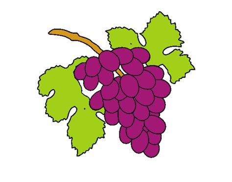 imagenes animadas de uvas dibujo de mis uvas pintado por en dibujos net el d 237 a 13 05