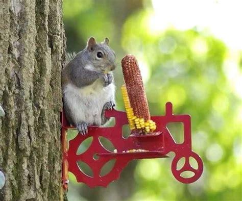 tractor squirrel feeder gifts  men