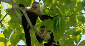 Rainforest Animals In The Canopy by Climate Change Could Flatten Rainforests Researchers Say