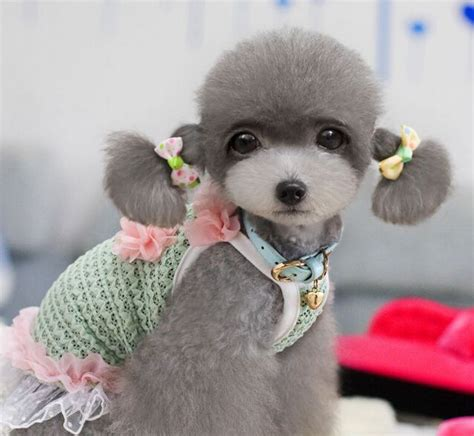 puppy hair bows puppies with bows www pixshark images galleries with a bite