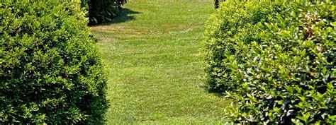 rospi in giardino un serpente in giardino che fare cose di casa
