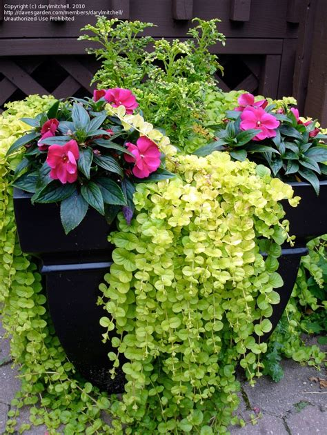 Container Flower Gardening Ideas Container Gardening Ideas Flowers Photograph Container Flo
