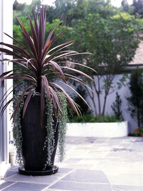 large outdoor pot plants buetheorg large outdoor