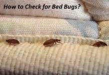 how to tell you have bed bugs how to stop itching from bed bug bites bed bug bite