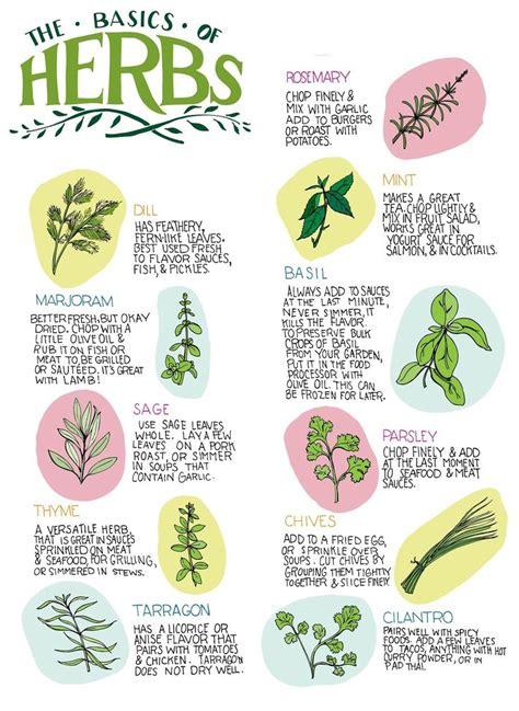 herbs chart herb chart herbs pinterest