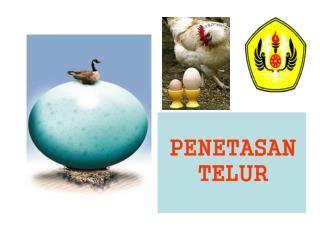 pembuatan telur asin herbal ppt telur powerpoint presentation id 2277619
