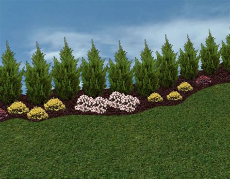 privacy landscaping trees privacy trees and hedges in