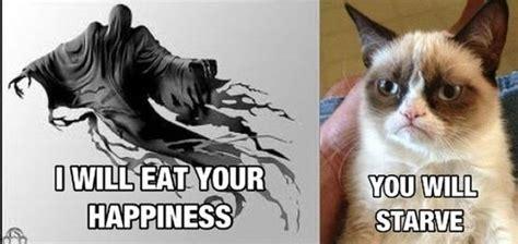 Best Of Grumpy Cat Meme - the best grumpy cat picture jokes memes pictures