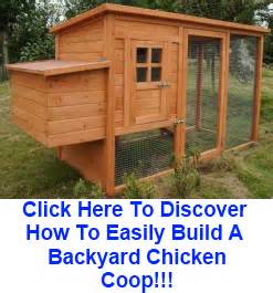 How To Build A Backyard Chicken Coop Hen S Learn Build Backyard Chicken Coop Plans