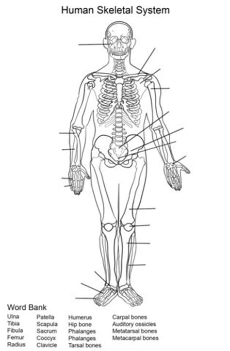 anatomy and physiology coloring workbook answers spinal cord 366 best images about educational coloring pages for