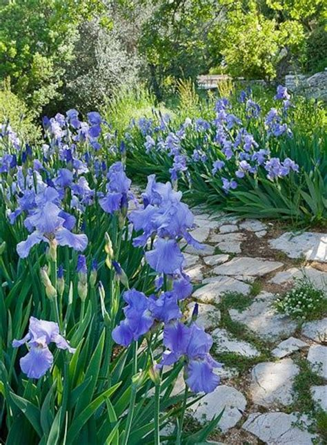 my grandmother s racialized and the pathway to mending our hearts and bodies books 25 best ideas about irises on iris iris