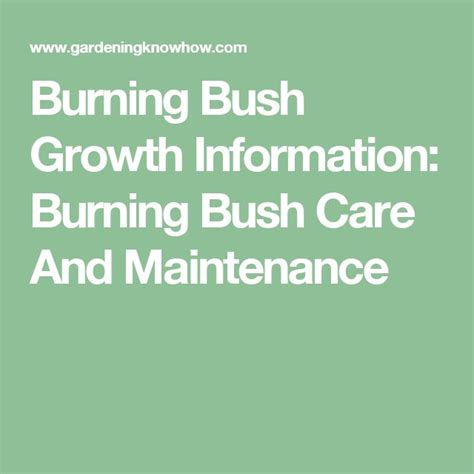 Backyard Shrubs 25 Best Ideas About Burning Bush On Pinterest Dwarf