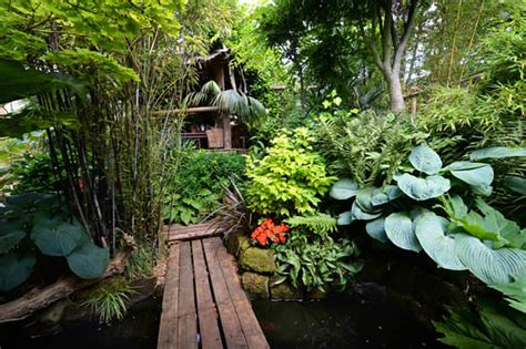 how to create a tropical backyard 14 cold hardy tropical plants to create a tropical garden in cold climate balcony