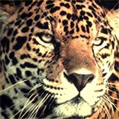 imagenes de jaguares mayas seamos primero jaguares lossalmones 2 gabitos