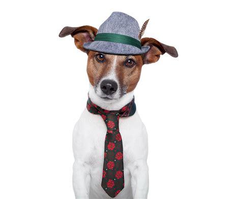 imagenes perros jack russell terrier fondos de pantalla perro jack russell terrier sombrero de