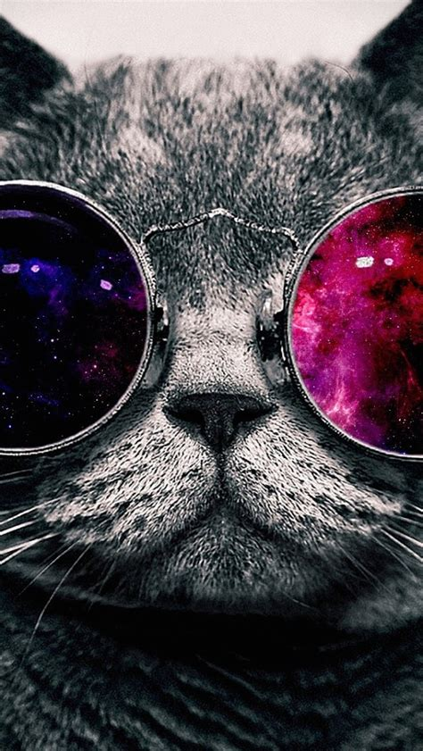 Iphone Wallpaper Cat Glasses | wallpaper iphone 5 s glasses cat 640 x 1136