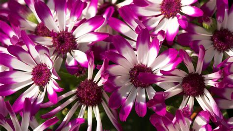 beautiful flowers image hd wallpapers high definition 100 quality hd desktop