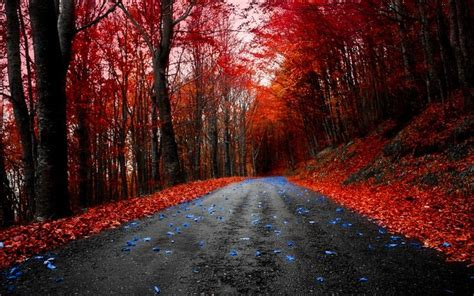 hd red maple road wallpaper