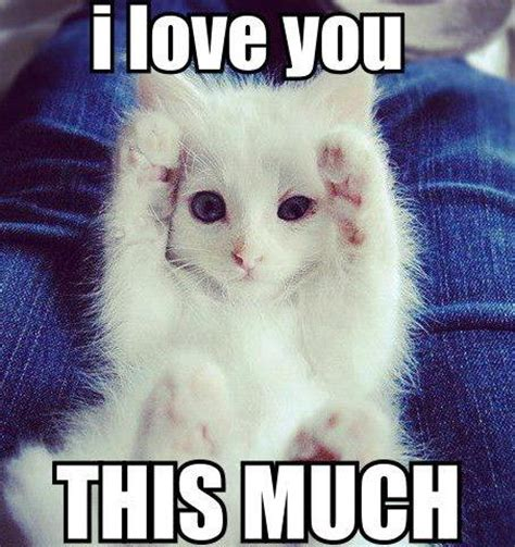 Cute Love Meme - i love you funny pictures quotes memes funny images