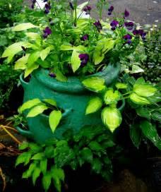hosta shiny penny carolyn s shade gardens