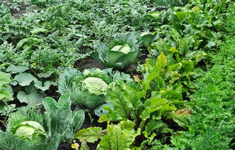 Intensive Vegetable Gardening Www Irrigation The Problem With Quot Intensive
